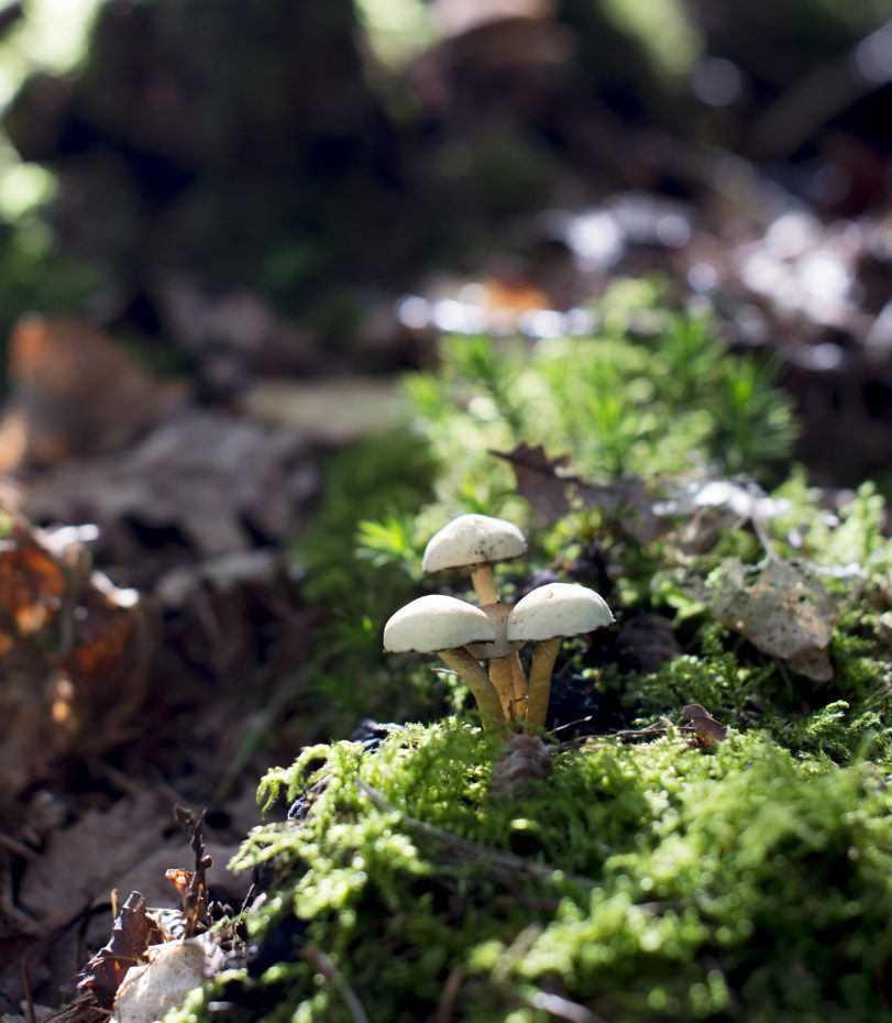 De herfst laat zich zien! Paddenstoelen in het Rijsterbos.