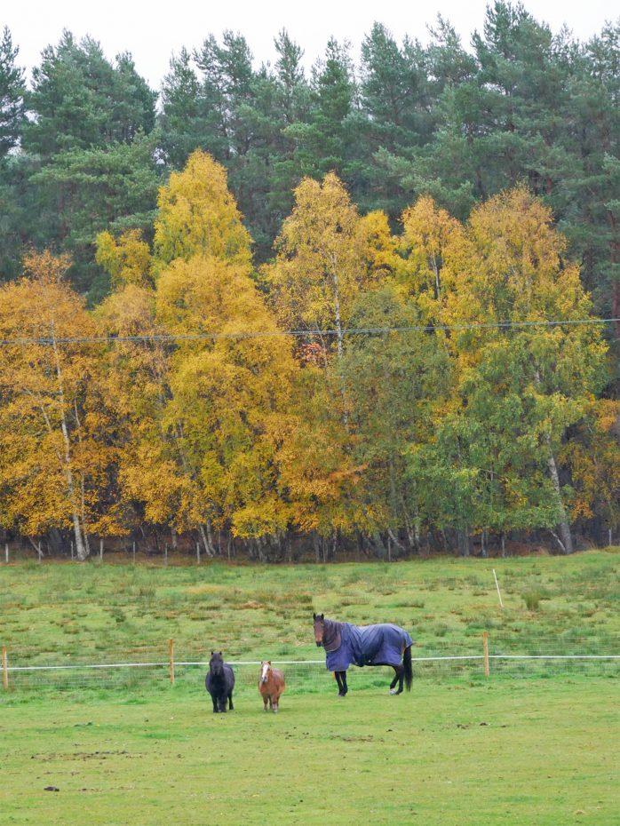 3 paarden op een rijtje