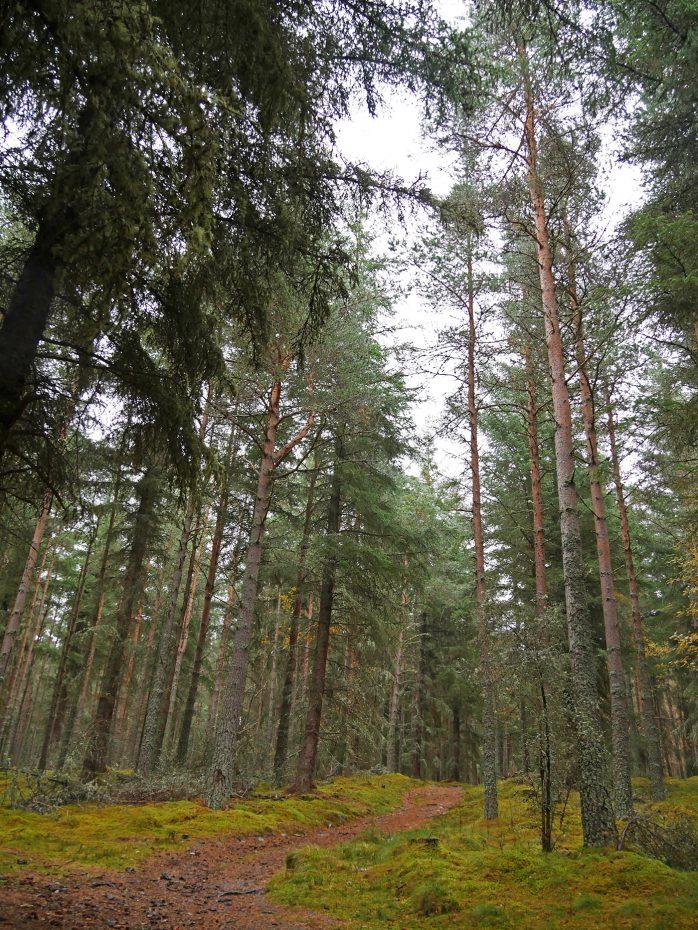 Echte Schotse bossen