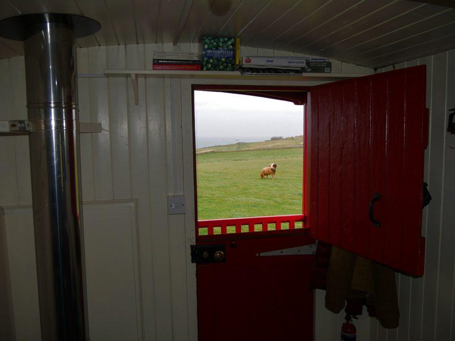 Uitzicht op de kust en de koeien