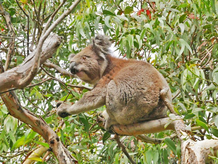 Australië versoepelt regels Working Holiday visa