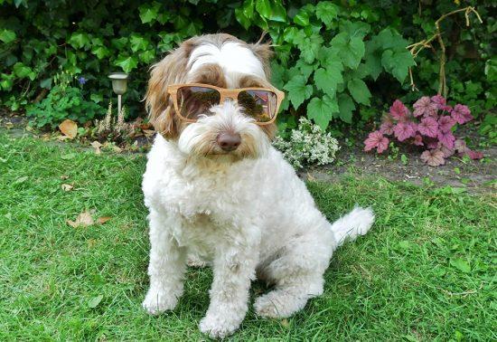 Reizen met een hond? Hier is je trouwe viervoeter meer dan welkom!
