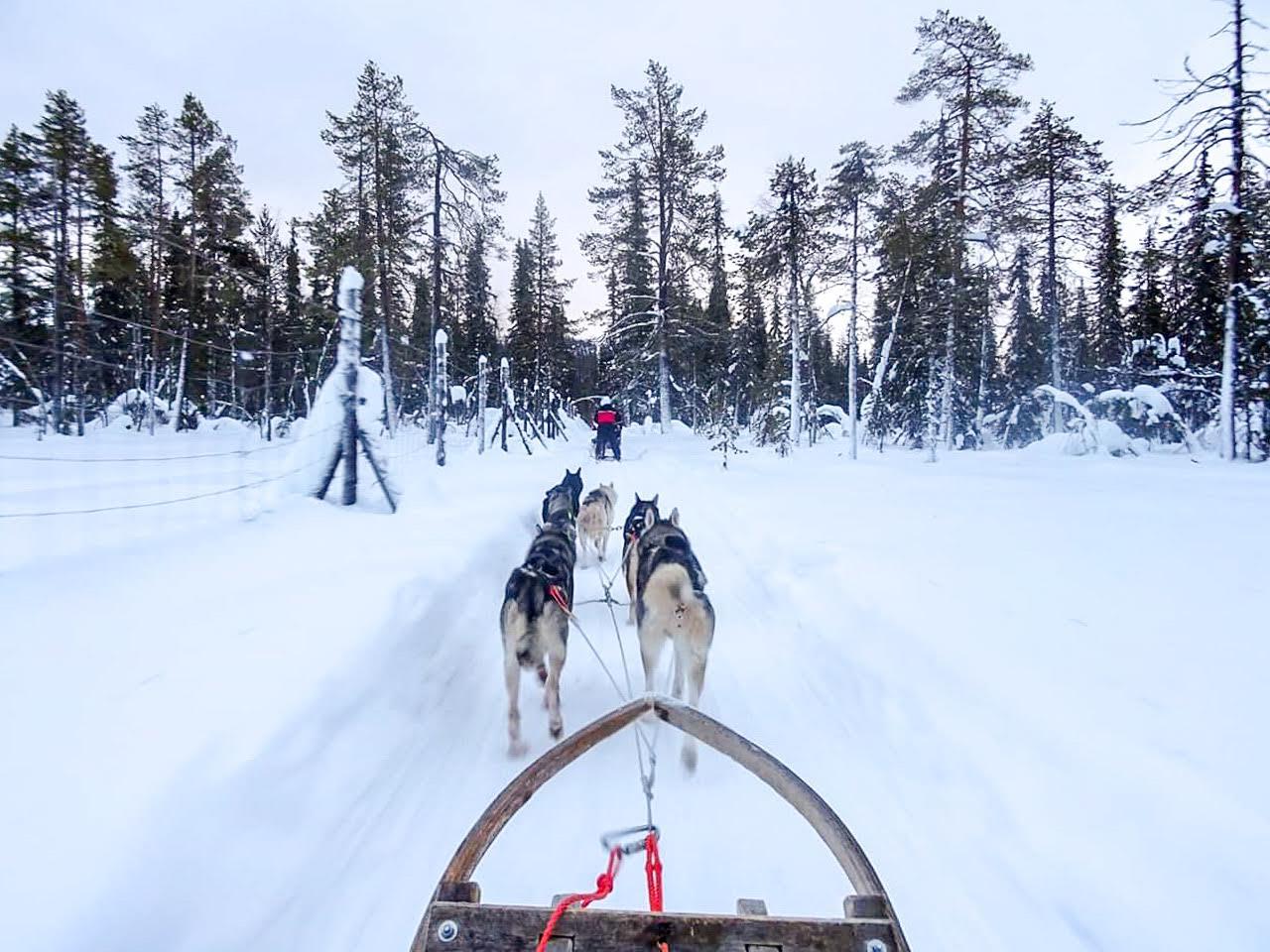 Op Husky safari in Lapland