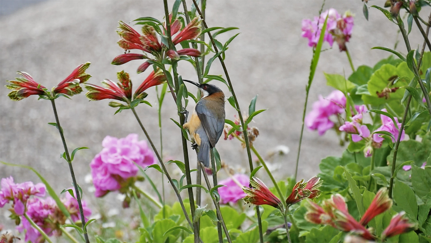 Mooie vogel gespot!