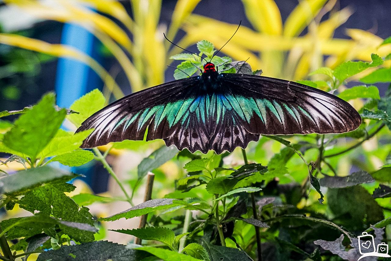 Butterfly-Garden - Cameron Highlands