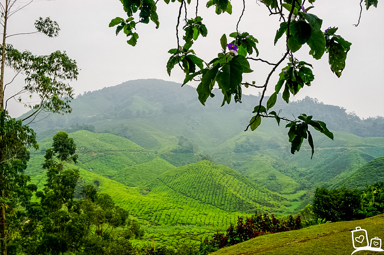 Theeplantages - Cameron Highlands