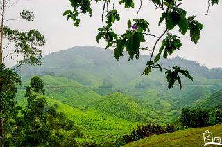 De Cameron Highlands: Genieten van de prachtige natuur tussen de heuvels en de theeplantages!