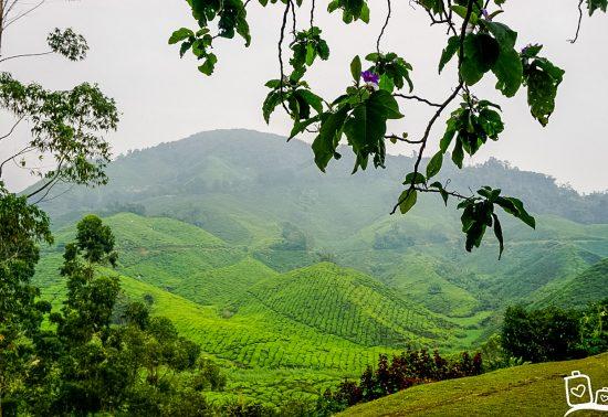 Bezienswaardigheden Cameron Highlands - Maleisië