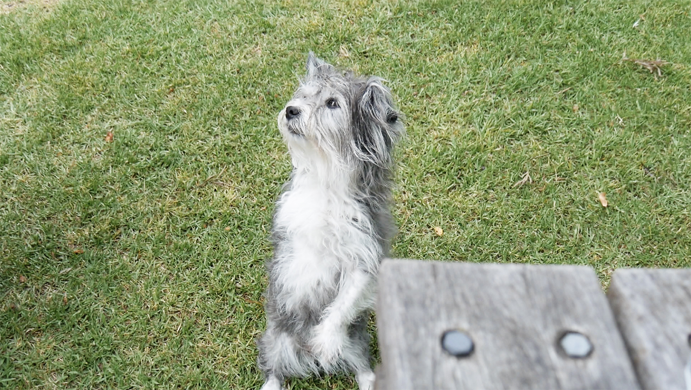 Hondje zoekt de gezelligheid op in Tilba