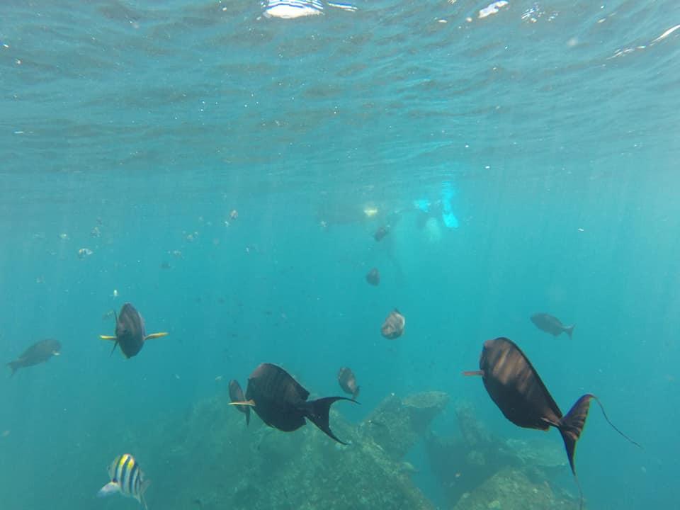 Zoveel gekleurde vissen bij elkaar, wat een mooie snorkelplek!!