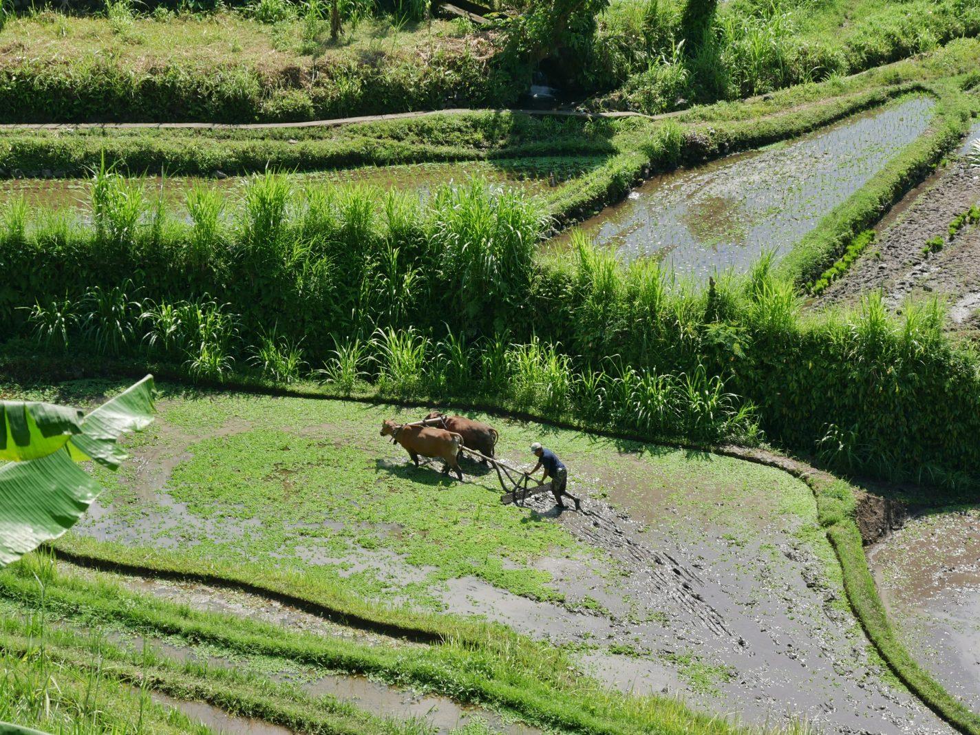 Boer is bezig op het land