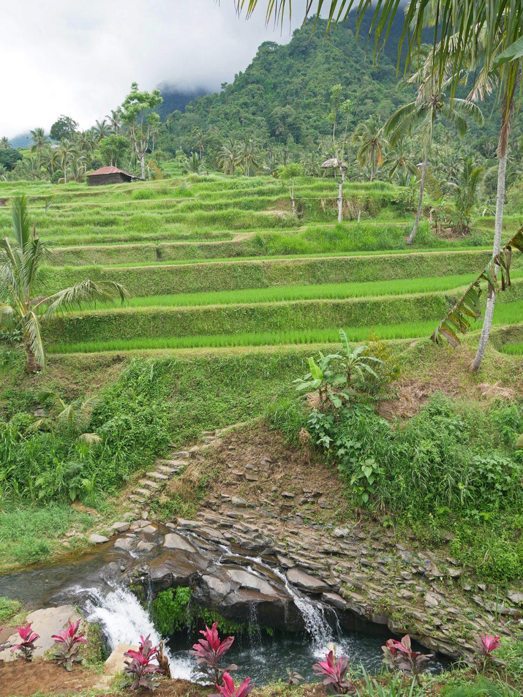 Prachtige natuur in Noord-Bali