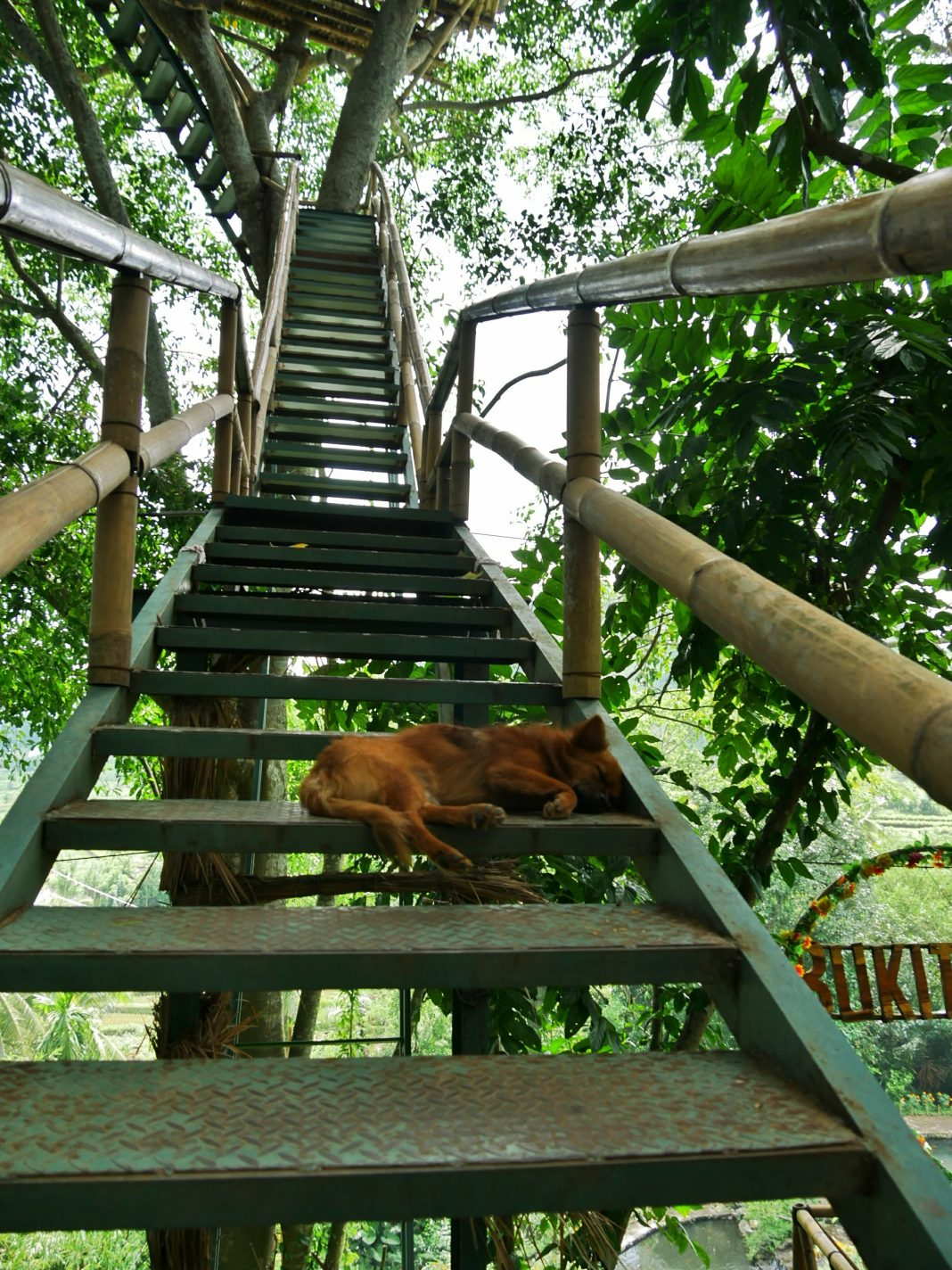 Treden naar boven - Treehouse Bali
