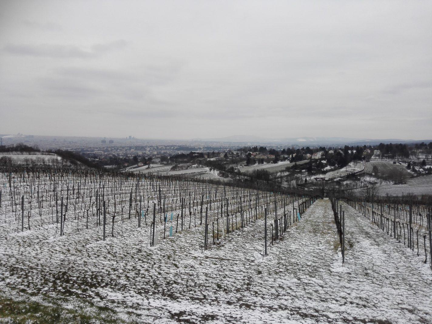 Weense Wijngaarden