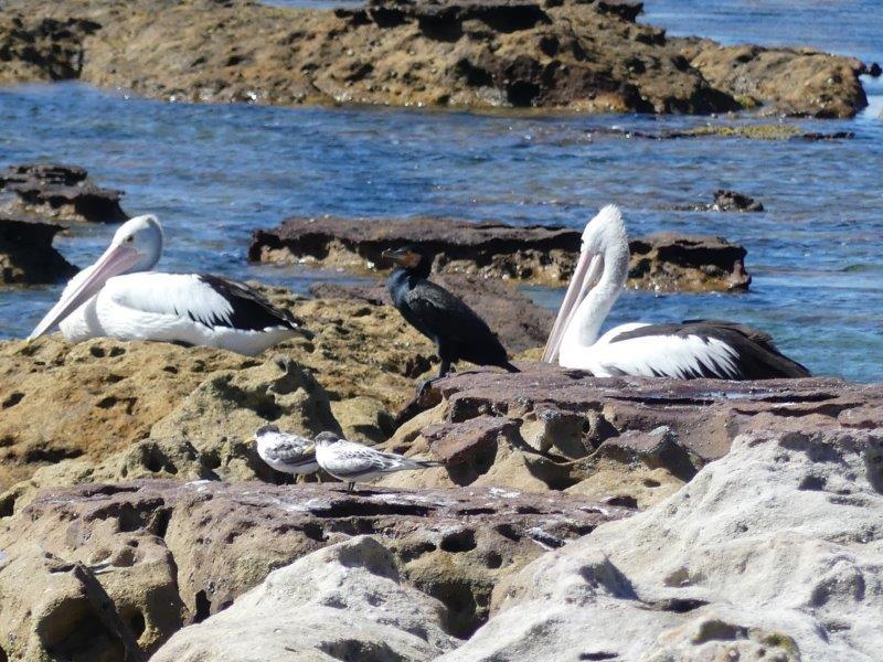 Wildlife bij Jervis Bay