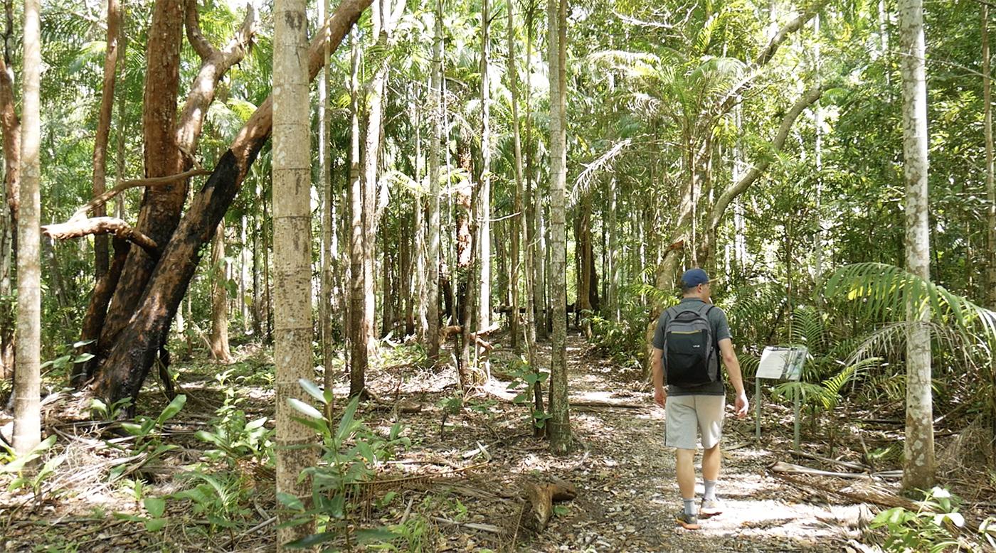 Dwars door het regenwoud (Greenant Creek trail)