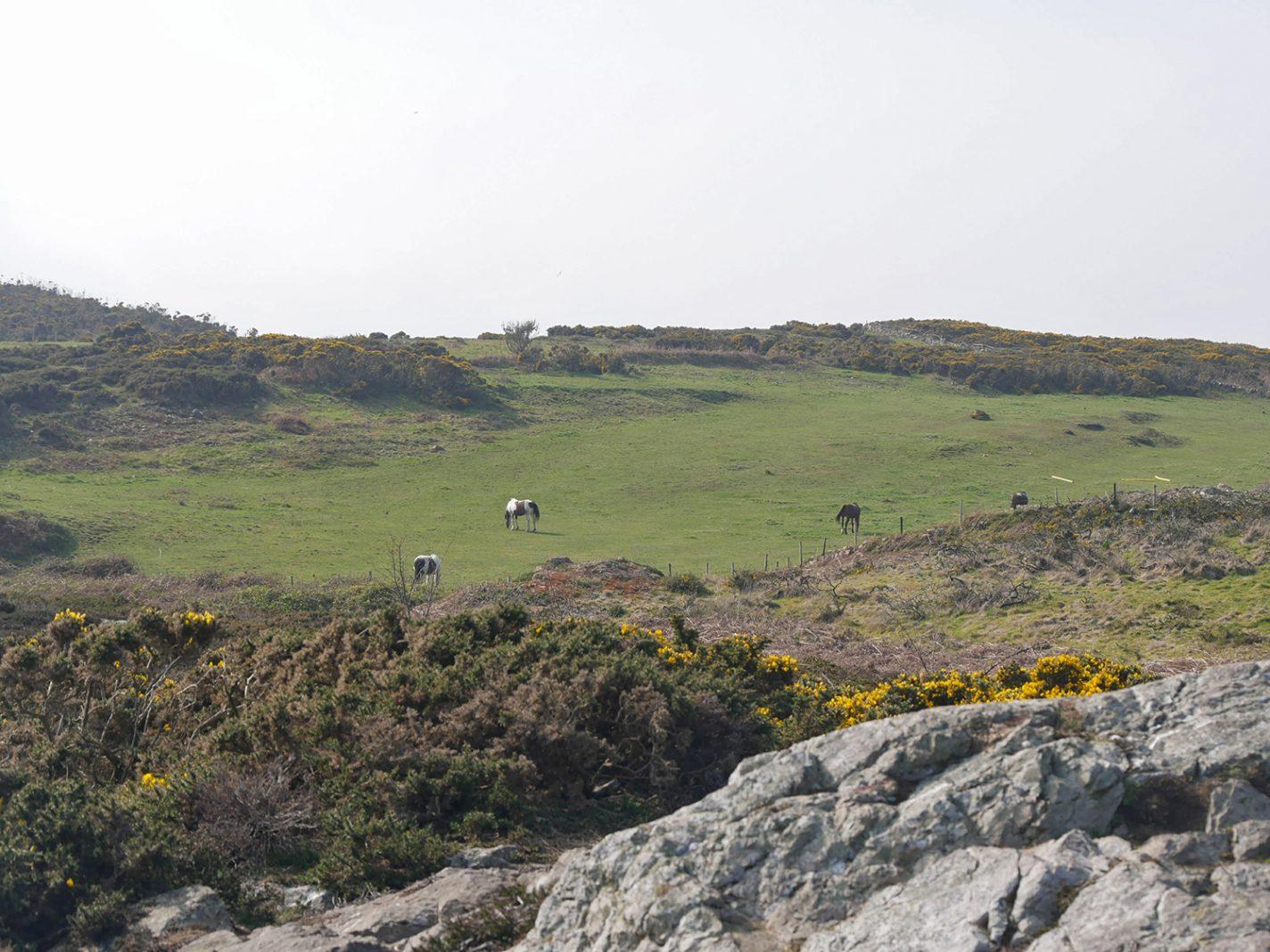 Een gevarieerd landschap, met ook paarden
