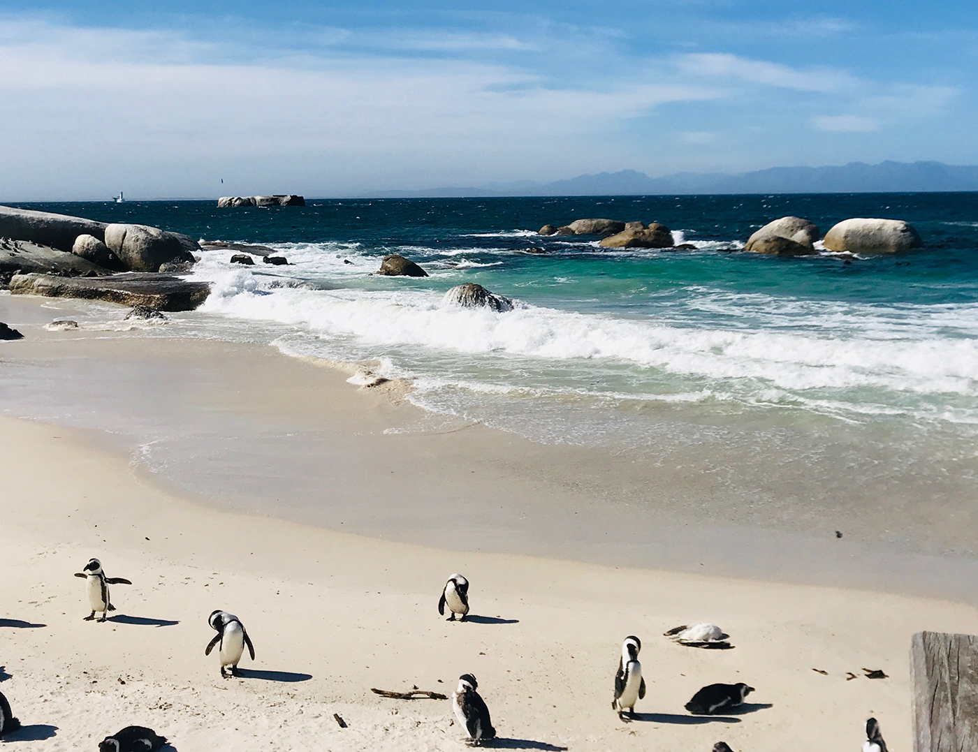 Pinguïns spotten