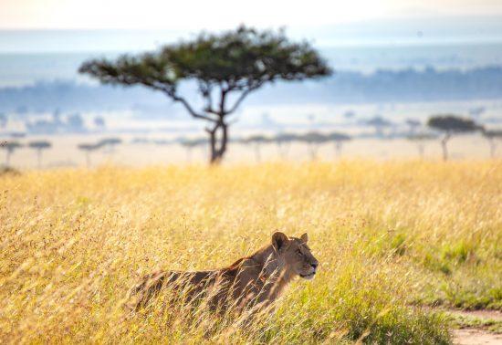 Visum aanvragen voor Kenia