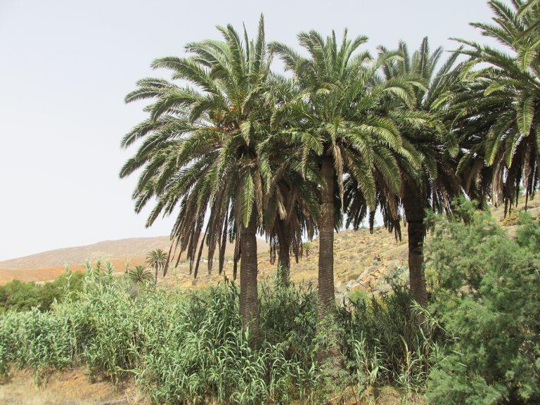 Ontdek het Canarische eiland Fuerteventura - Spanje