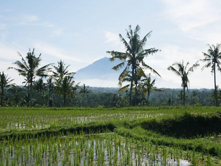 Word de nieuwe videoreporter en win een reis naar Indonesië!