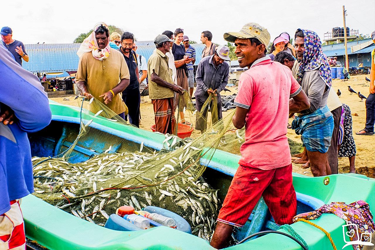 Breng een bezoek aan de vismarkt in Negombo