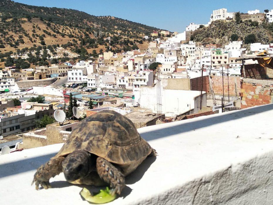 Marokkaanse pareltjes: ontdek Moulay Idriss en Volubilis