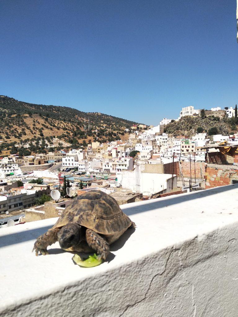 Moulay Idriss en Volubilis - Marokko