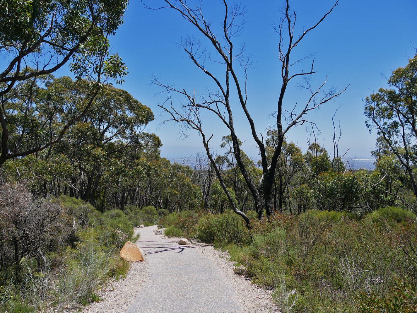 Weer afdalen, lopen richting Waterfall Gully - Mount Lofty hike