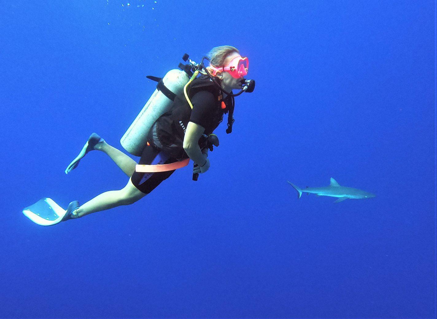 Haaien spotten tijdens het duiken