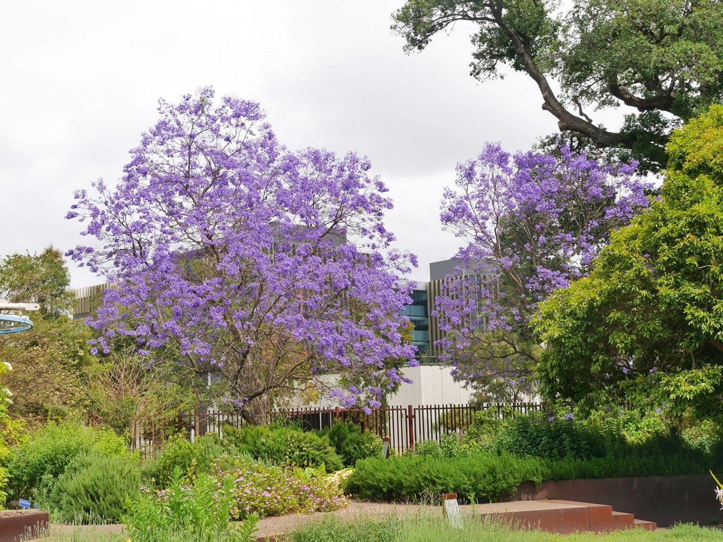 De bomen staan mooi in bloei