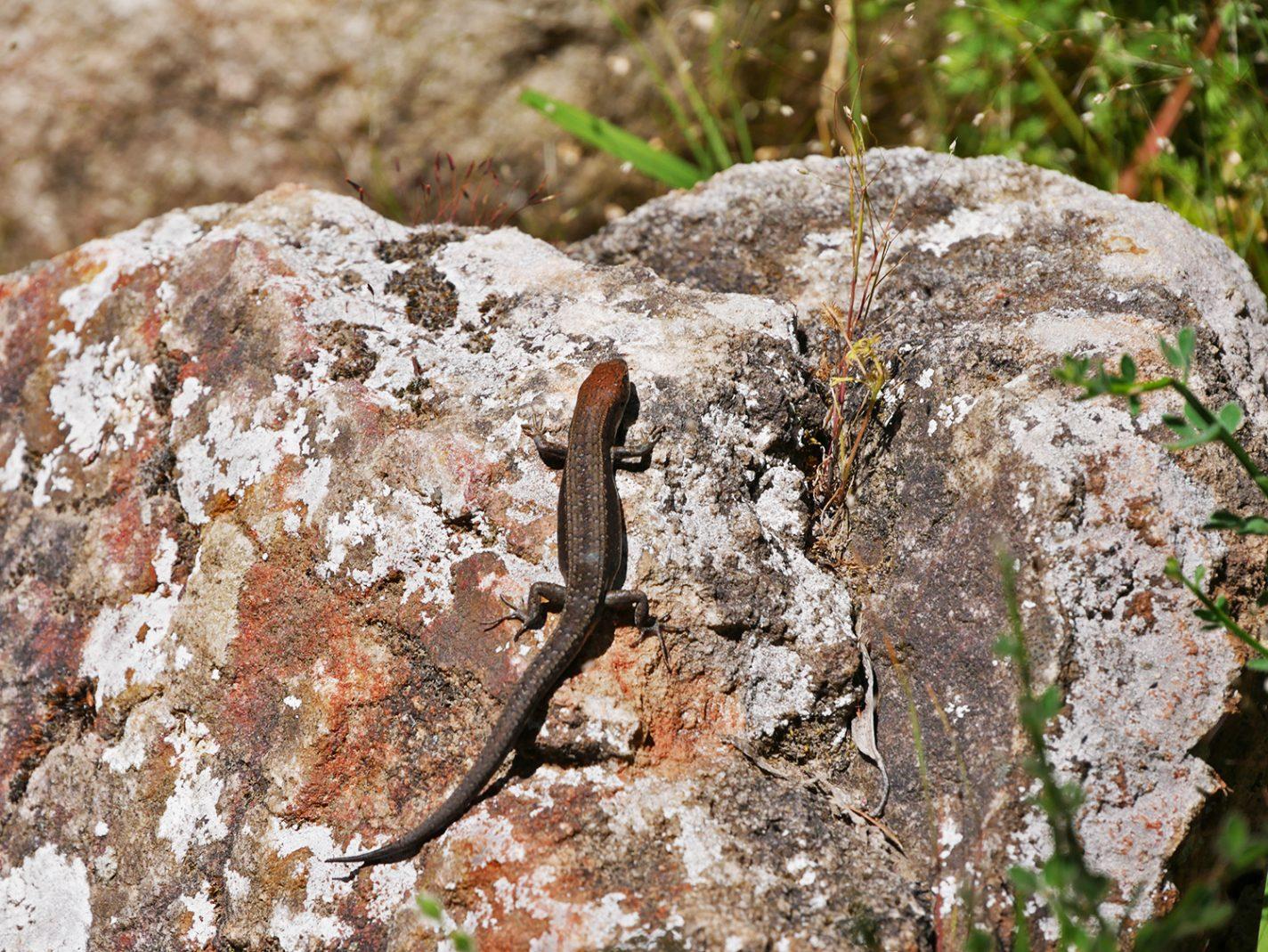 Wildlife tijdens de hikingtocht