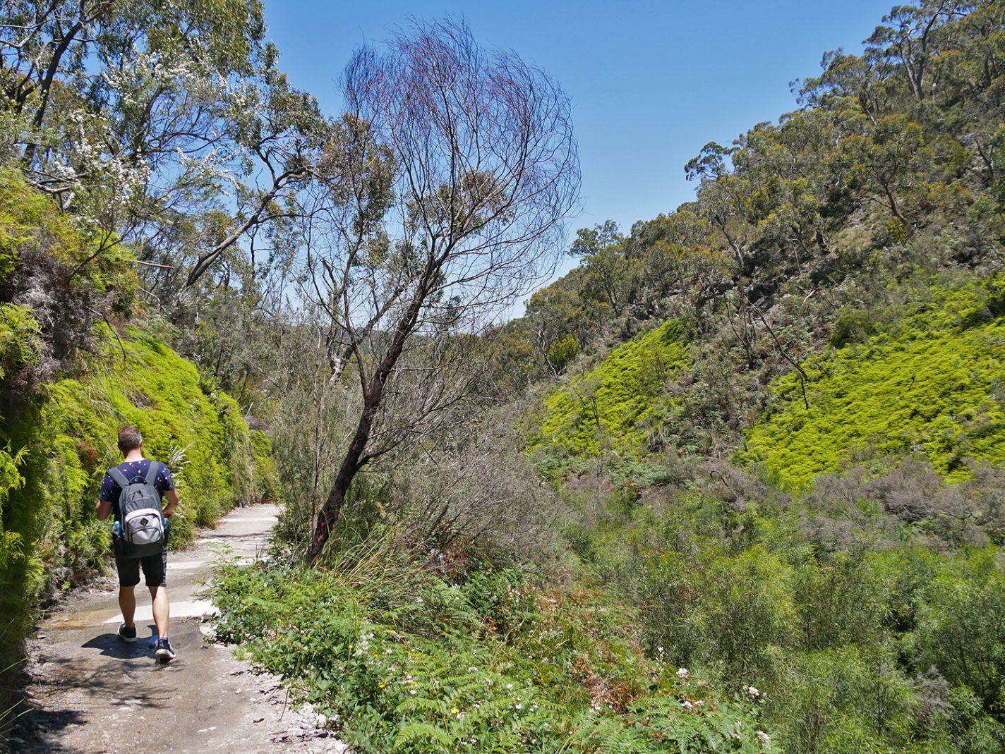 Een gebied met veel verschillende bomen en planten - Mount Lofty Adelaide