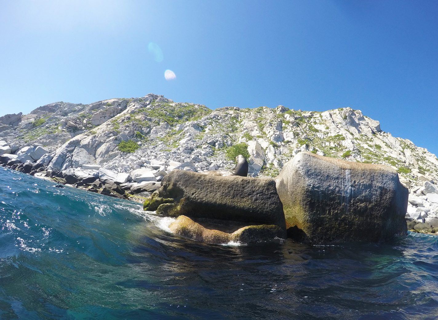 Zeeleeuwen gespot bij Cabo Pulmo - Baja California Sur