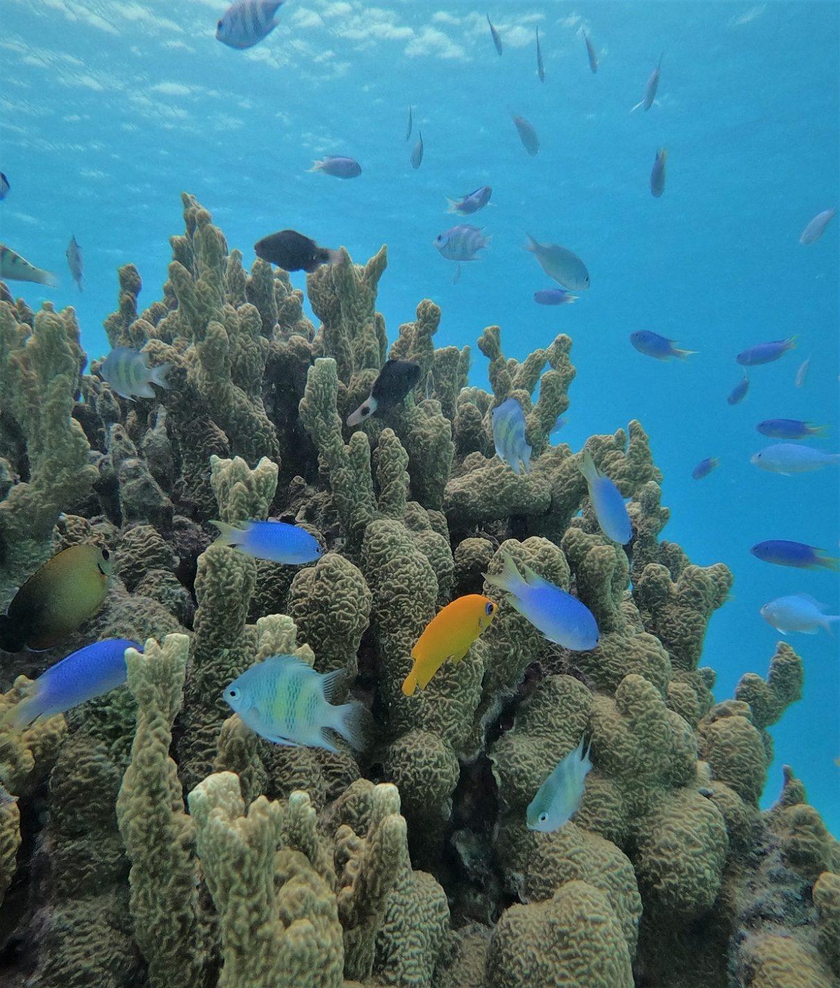 Veel mooie visjes in het water, slechts een paar meter van de waterlijn - Marshall islands