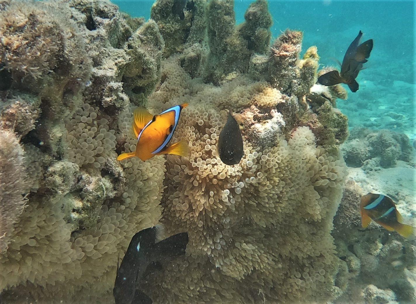 Nemo's op onze eigen snorkeltrip