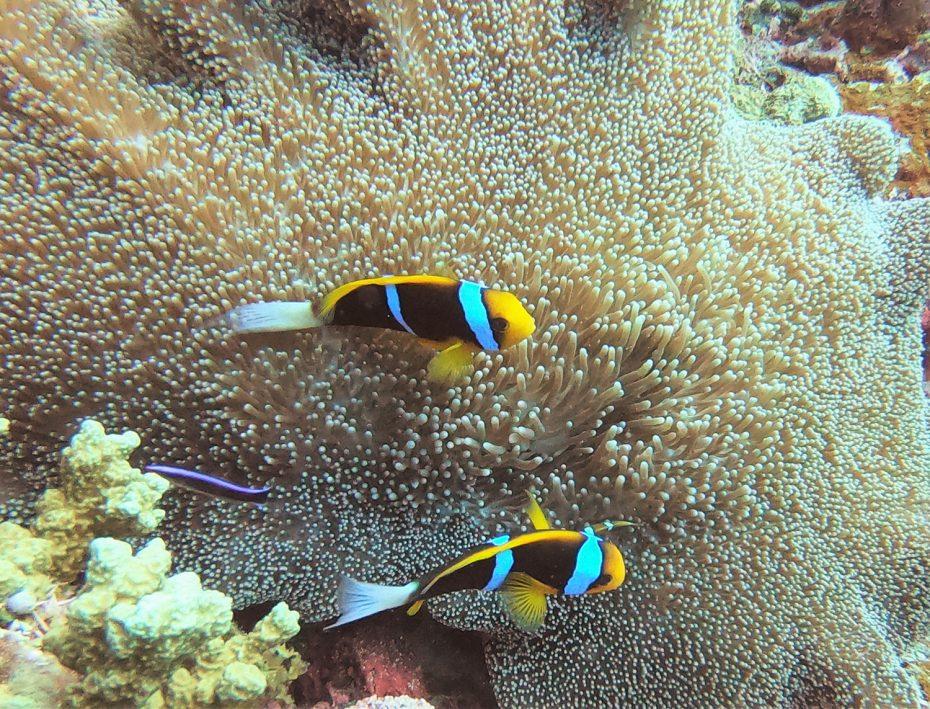 De Solomon Islands - Van Micronesië naar Melanesië