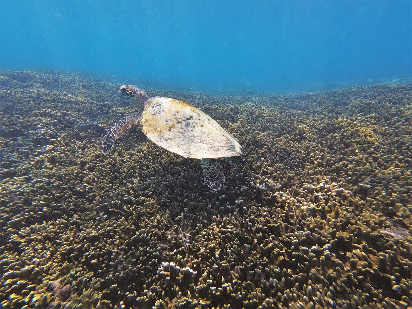 Prachtige schildpad gespot