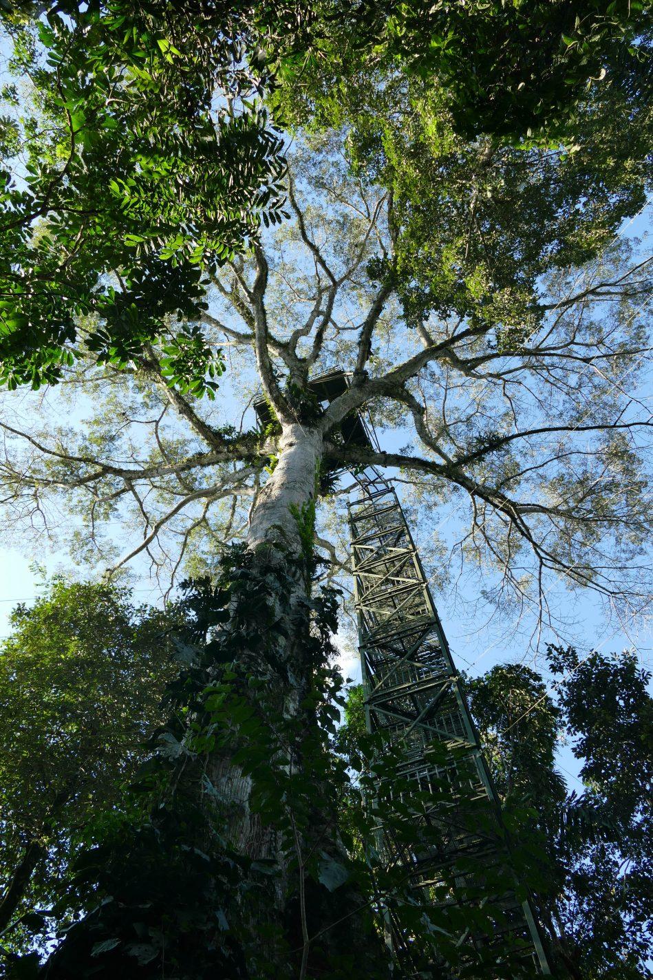 Uitkijktoren in de Amazone
