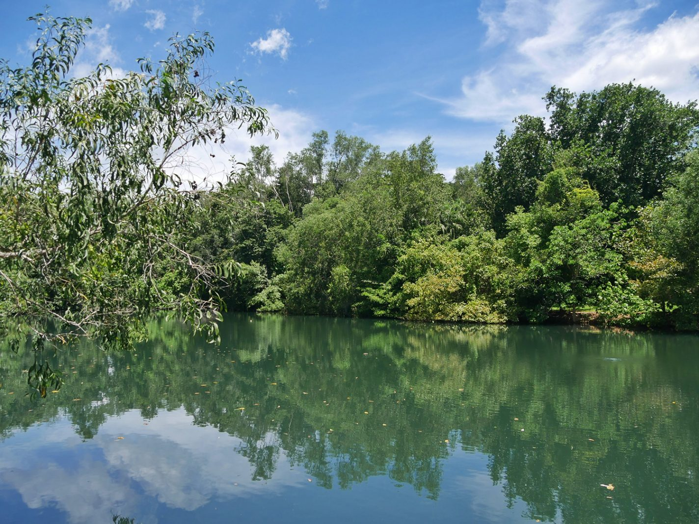 Het grote meer bij Howard Springs Nature Park