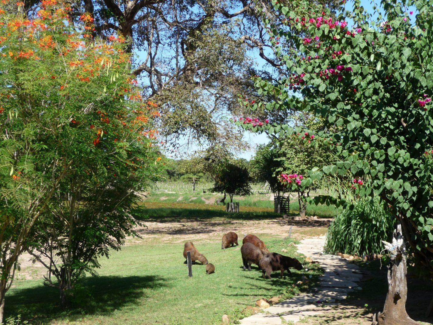 Capibaras bij de Araras Ecolodge