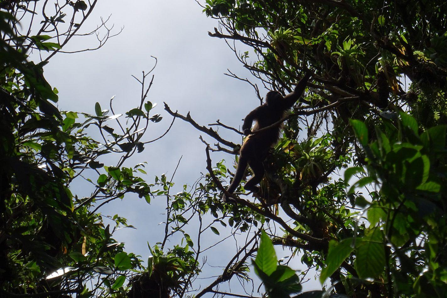 Aap in de jungle