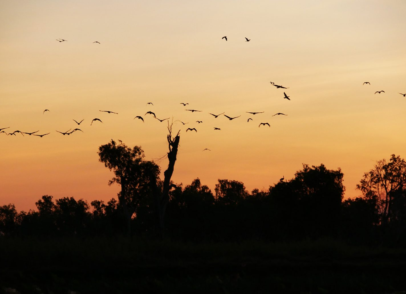 Nu worden de vogels helemaal actief, op zoek naar hun laatste prooi - Corroboree Billabong Wetland Cruise