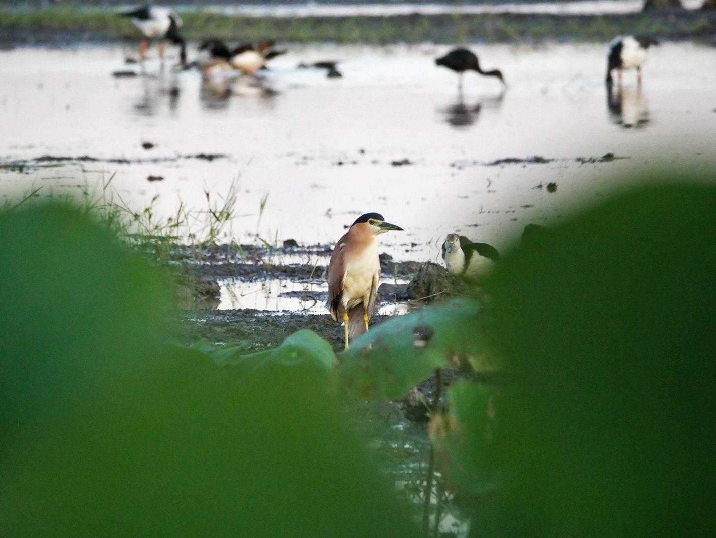 Wetland vol met prachtige vogels