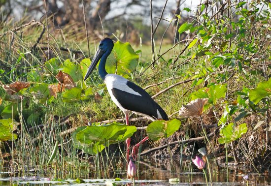 Corroboree Billabong Wetland Cruise