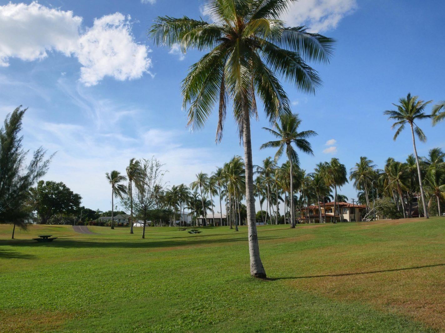 Grasveld met palmbomen en picknicktafels