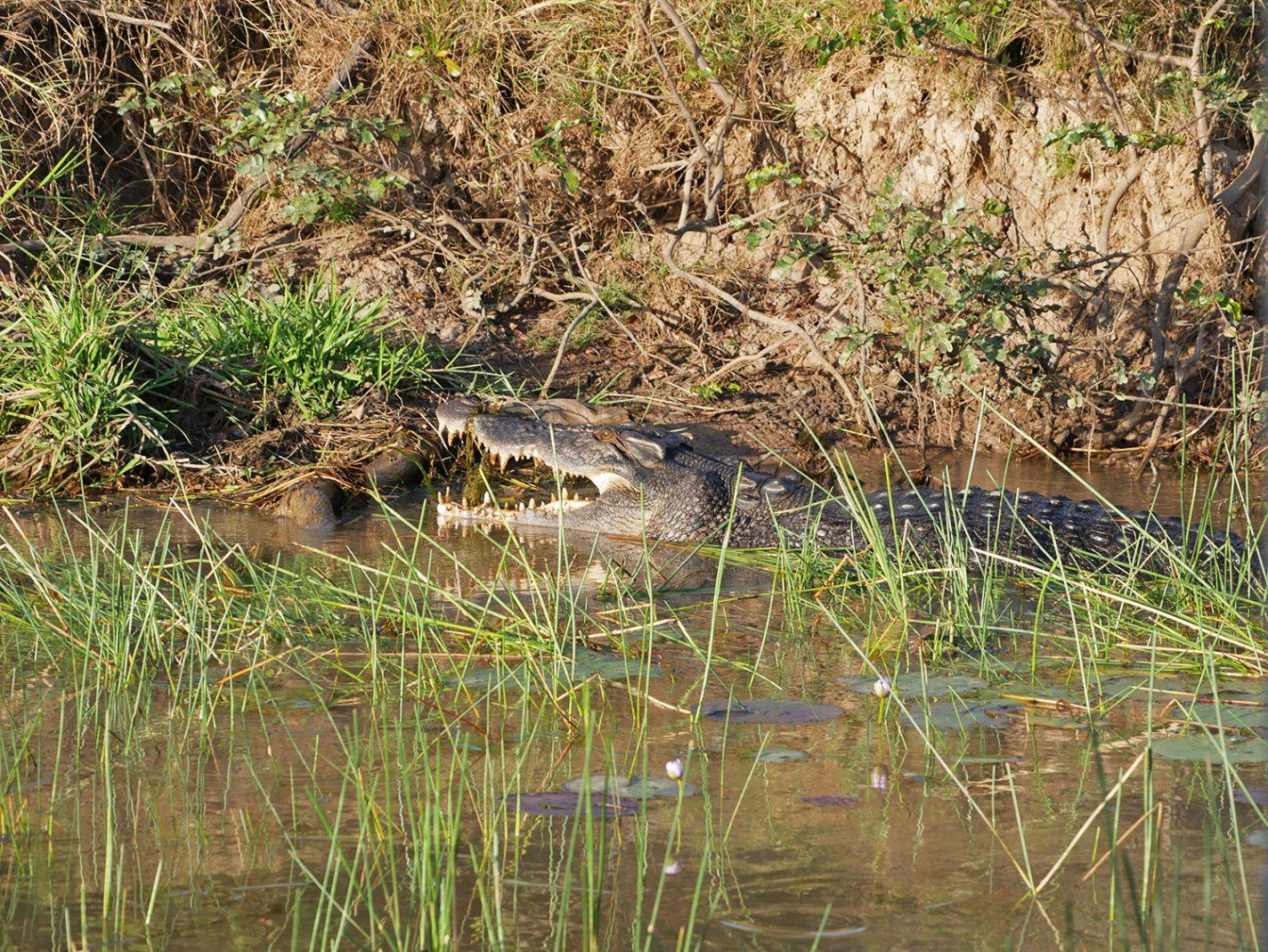 Weer een krokodil gespot - we zitten ondertussen op 4 - Corroboree Billabong Wetland Cruise