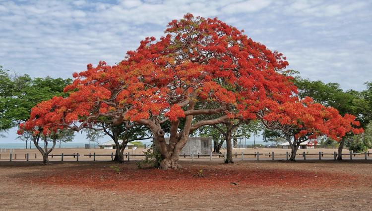 Ontdek Darwin – Northern Territory