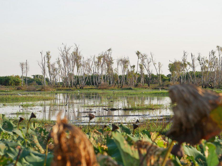 Zoveel verschillende vogels bij elkaar - Corroboree Billabong Wetland Cruise