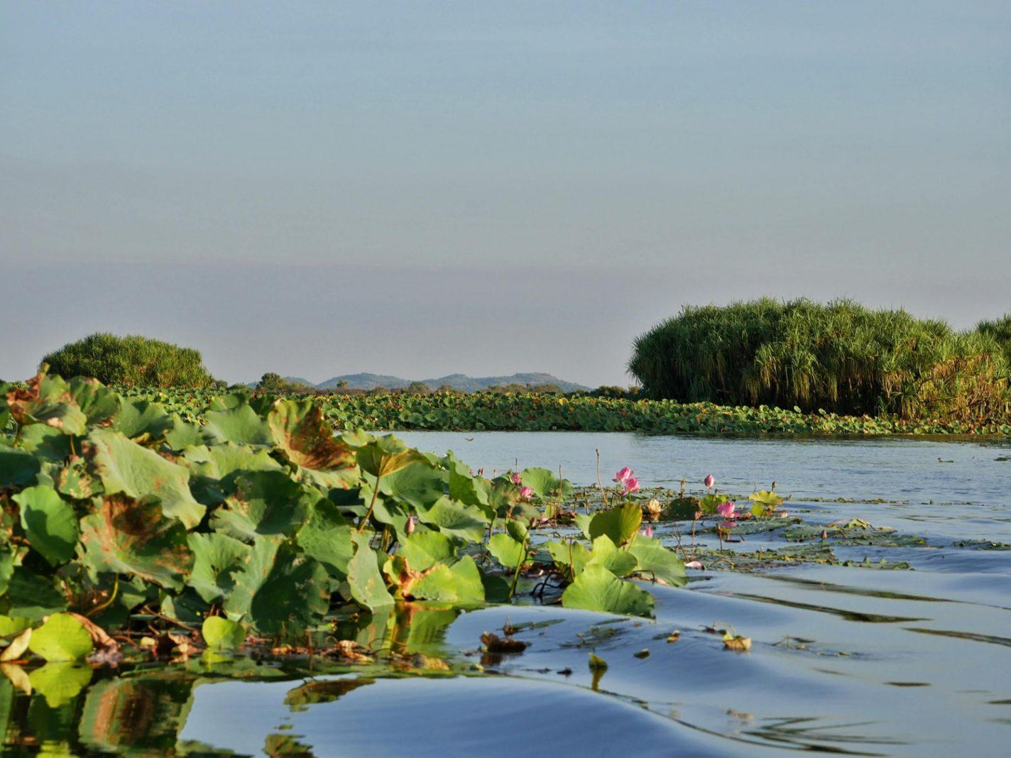 De Mary River vol met waterlelies